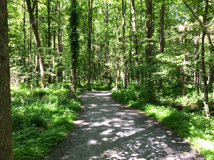 Huntley Meadows Cedar Trail is a wooded level walk