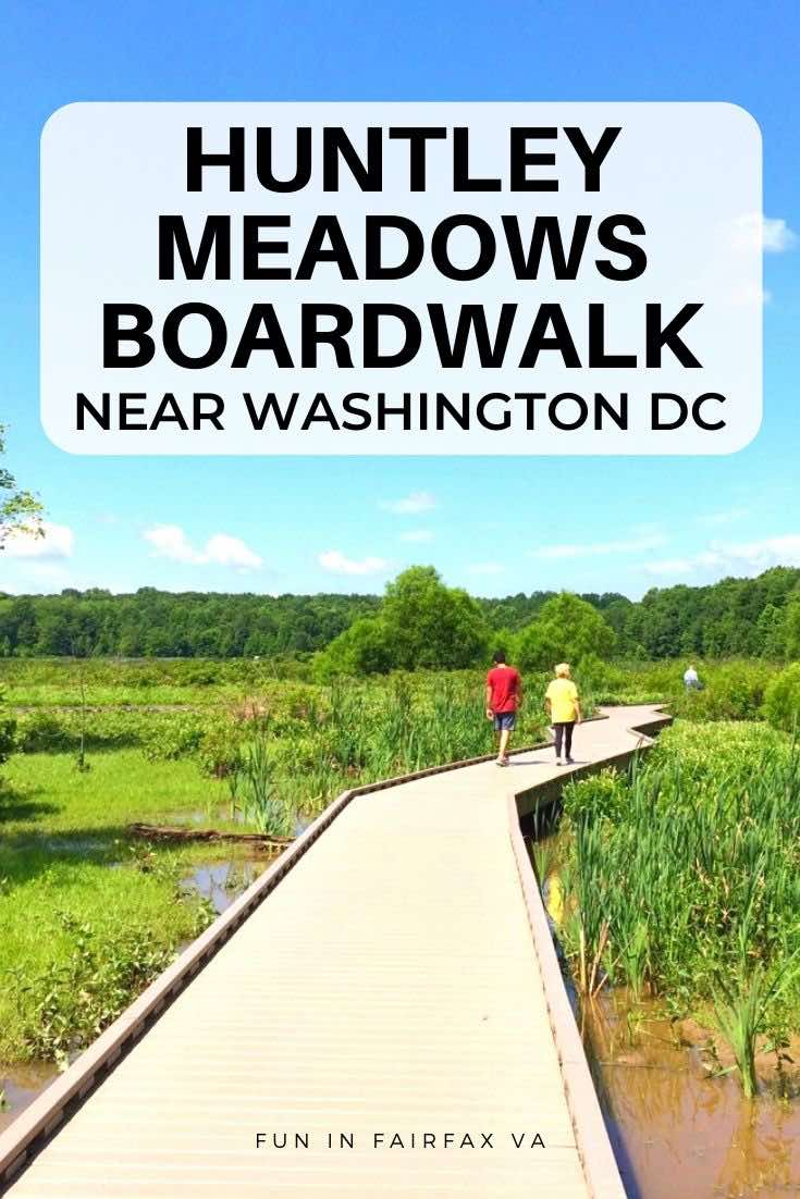 Huntley Meadows Park is a hidden gem of Northern Virginia with a half-mile accessible boardwalk, woodland trails, and a unique hemi-marsh wildlife habitat.