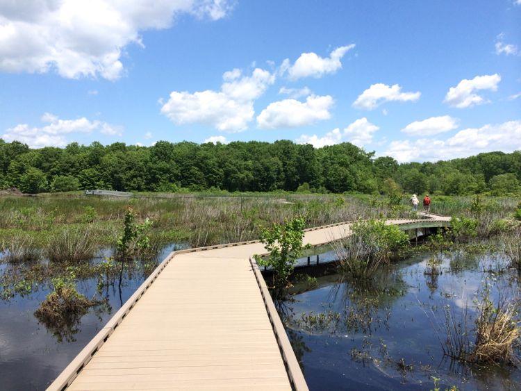 boardwalk at Huntley Meadows Park Virginia