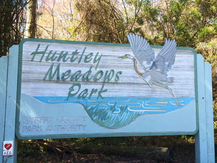 Look for this sign at the entrance to Huntley Meadows Park