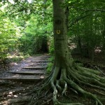 Horse trail Clifton Va