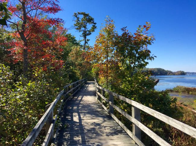 Fall foliage lines the Bay View Trail at Mason Neck State Park in Virginia