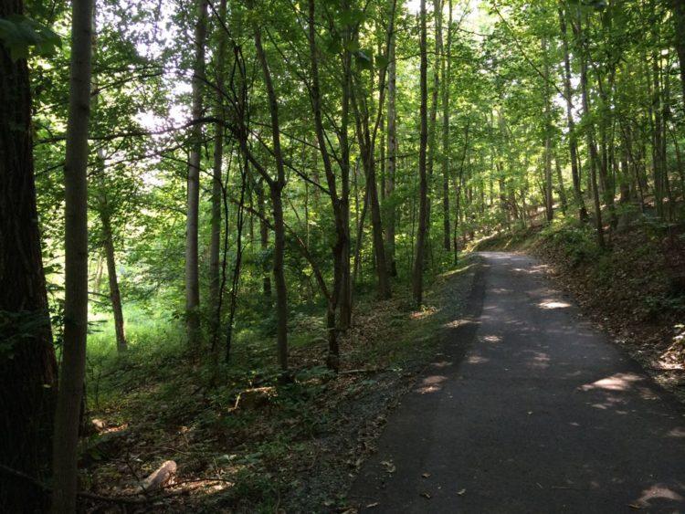 CCT seg8 shady path