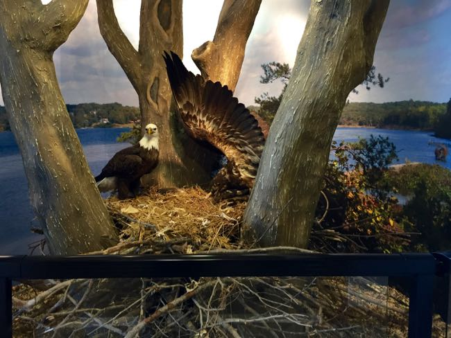 Eagle display Mason Neck SP