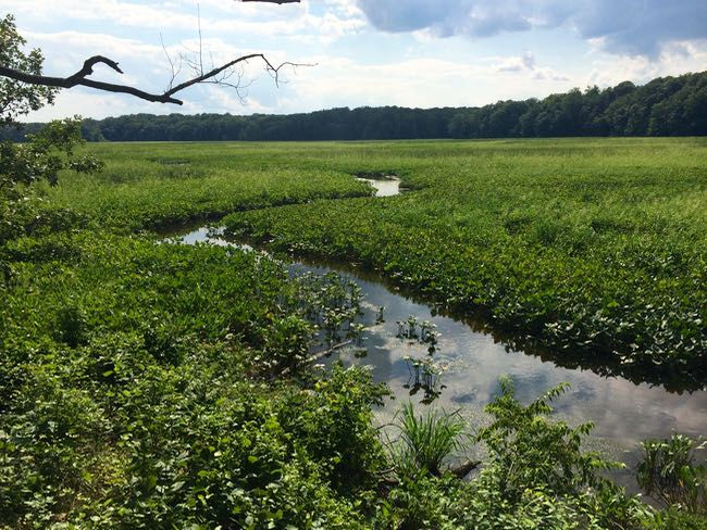 Great Marsh Trail view