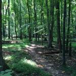 CCT seg 7 path