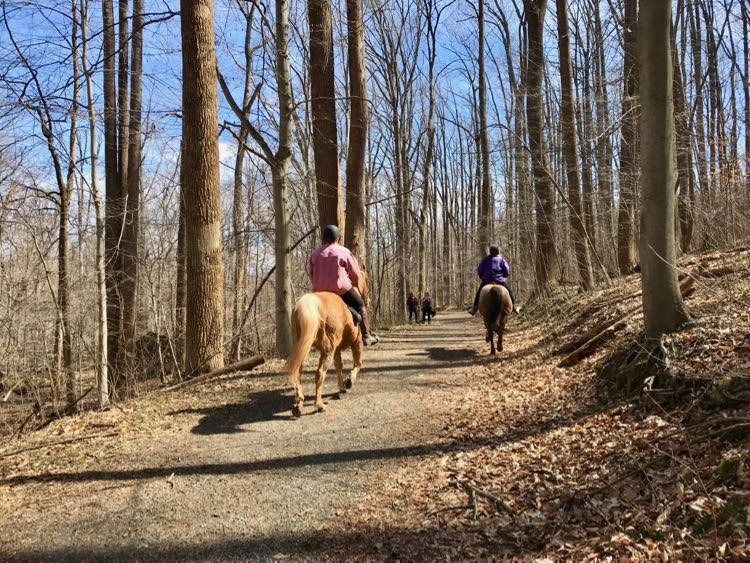 Horses on a bridle trail at Seneca Regional Park, Great Falls VA