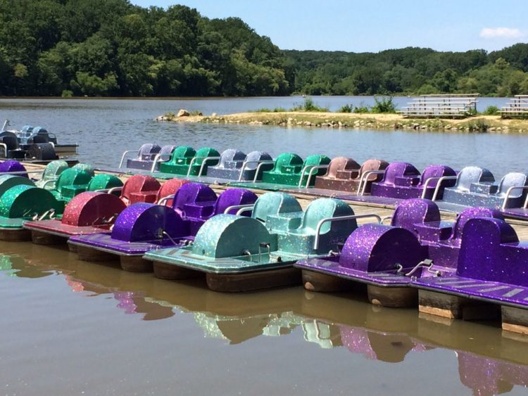 Lake Accotink paddle boats