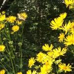 Meadowlark Gardens Virginia butterfly