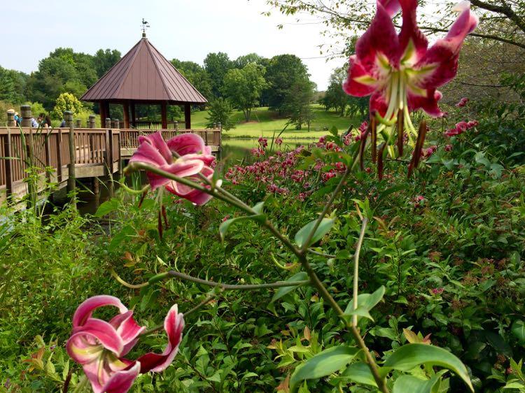 Meadowlark Botanical Gardens gazebo