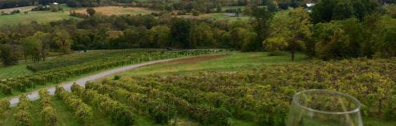 Bluemont Vineyards view