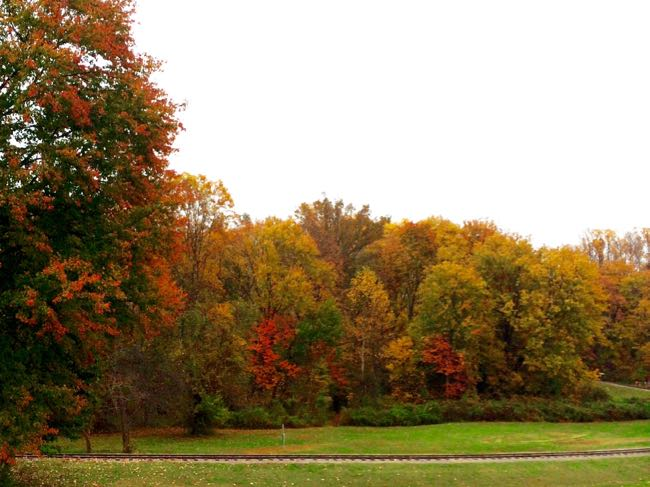 Fall foliage around Burke Lake 2014