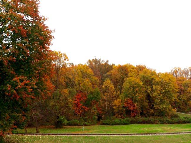 Fall foliage around Burke Lake 2014