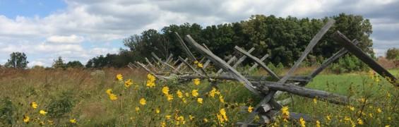 Fence and flowers Manassas