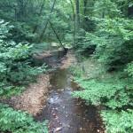 Long Branch Stream Valley