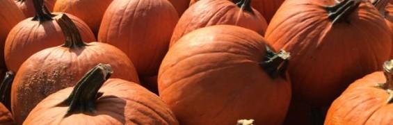 Pumpkins Krops Crops