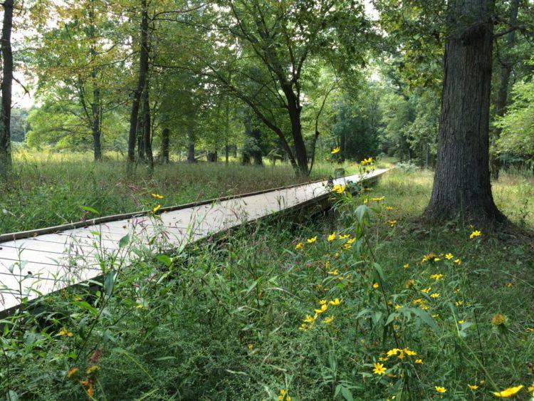 Stone Bridge boardwalk and flowers