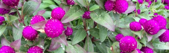 Flora3 Green Spring
