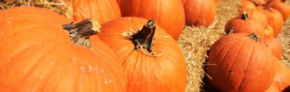 Find a perfect pumpkin at a Northern Virginia pumpkin patch.