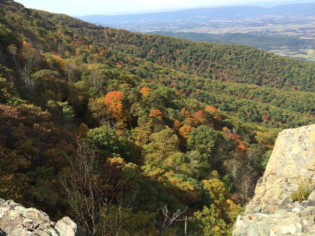 Shenandoah foliage from Little Stony Man