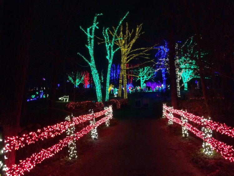 Winter Walk of Lights pathway