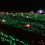 Field of pumpkin lights at Meadowlark