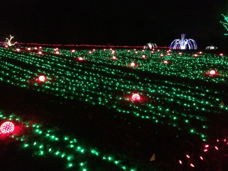 Field of pumpkin lights at Meadowlark Winter Walk of Lights