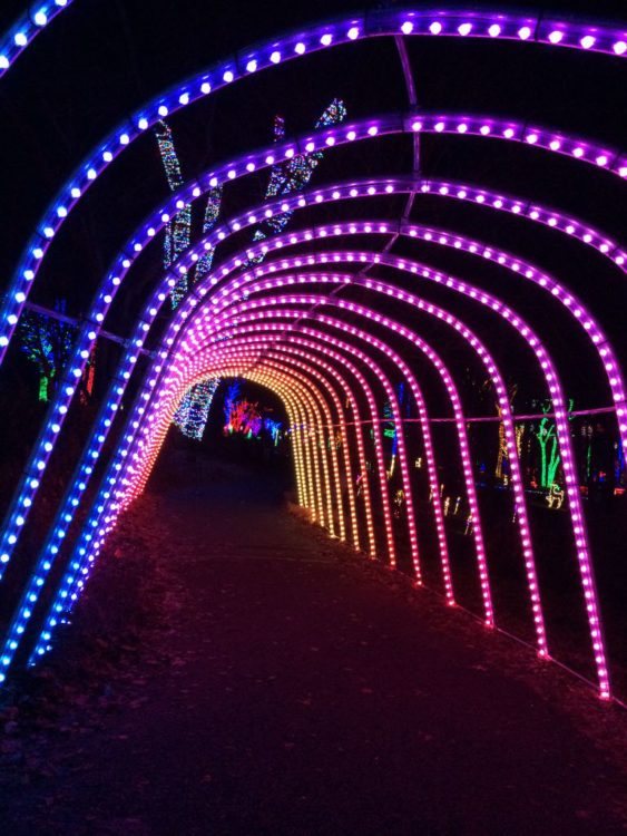 Meadowlark tunnel of lights