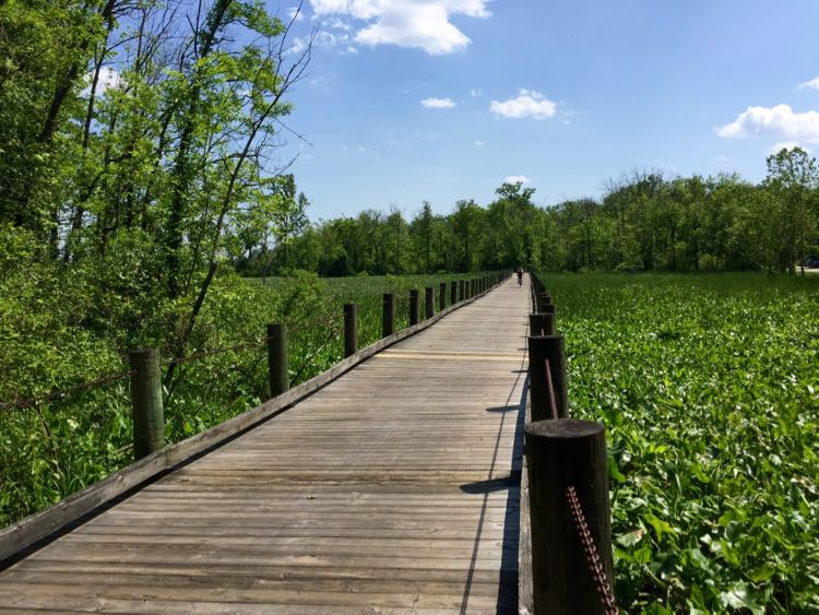 Mount Vernon Trail boardwalk over Dyke Marsh