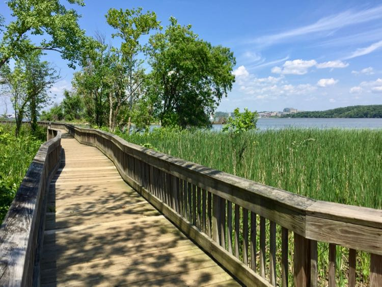 Dyke Marsh boardwalk in spring