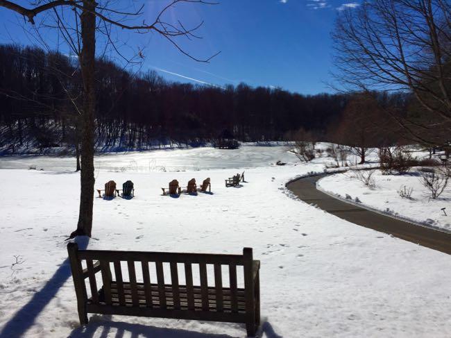Snowy Meadowlark Botanical Gardens in Vienna Virginia