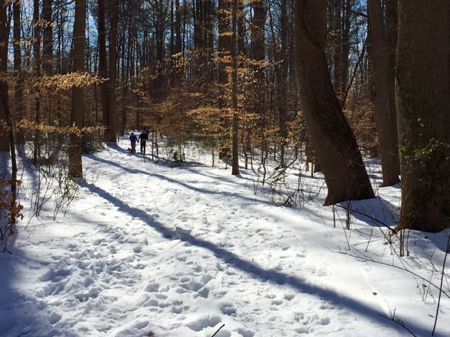 Snowy trail around Burke Lake Park