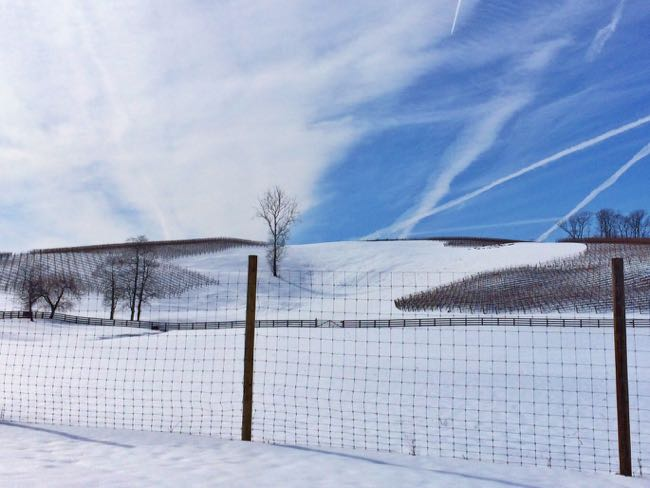 Wintery vineyard view in Loudoun County VA