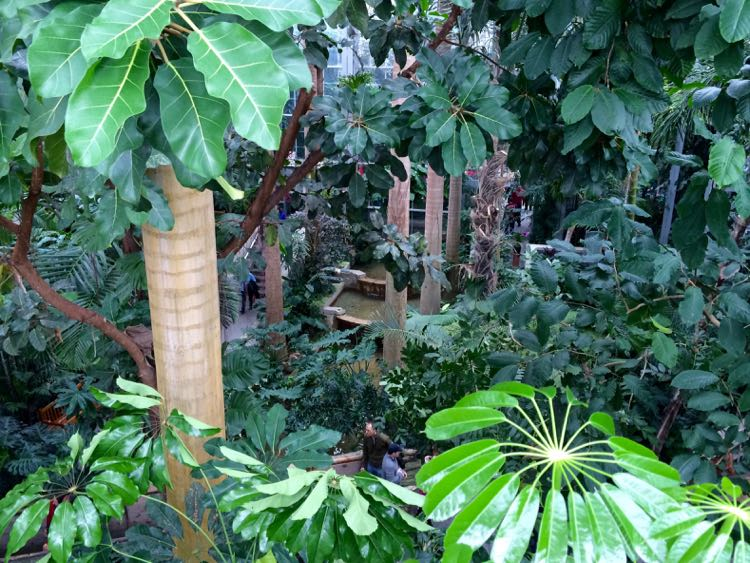 Jungle plants at US Botanic Garden