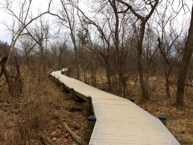 Roosevelt Island Swamp Trail