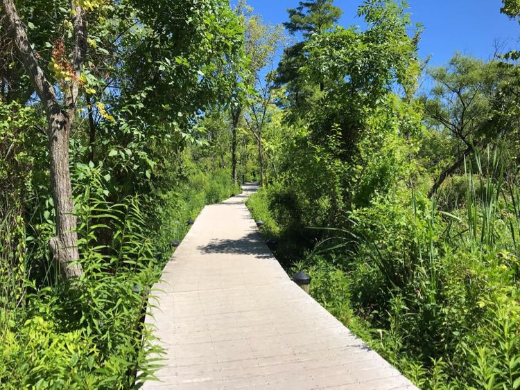 Theodore Roosevelt Island boardwalk hike is surrounded by green in summer