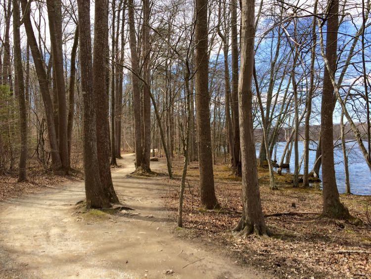 Burke Lake Trail in Spring