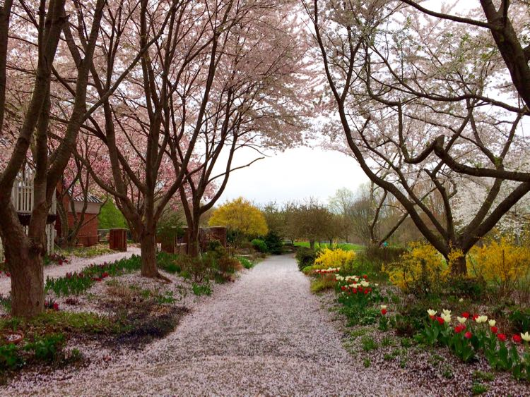 Meadowlark Botanical Gardens in Vienna, Virginia is a beautiful place to celebrate spring in Northern Virginia