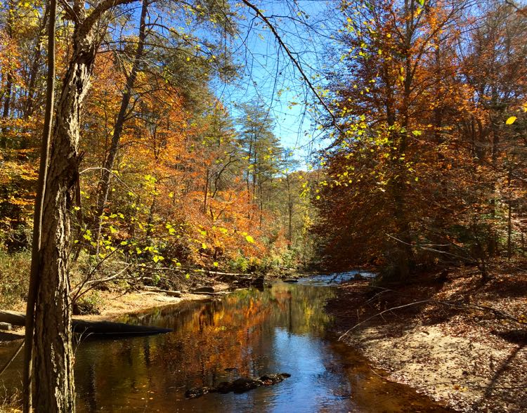 Prince William National Forest Park in Virginia