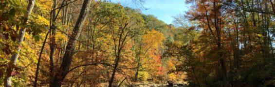 The Cross County Trail follows Difficult Run in Great Falls Virginia