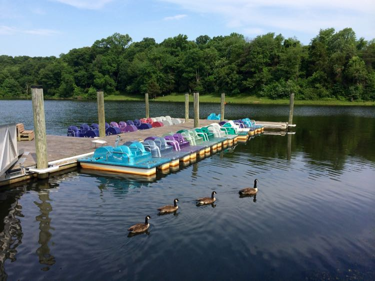 Lake Fairfax paddleboats