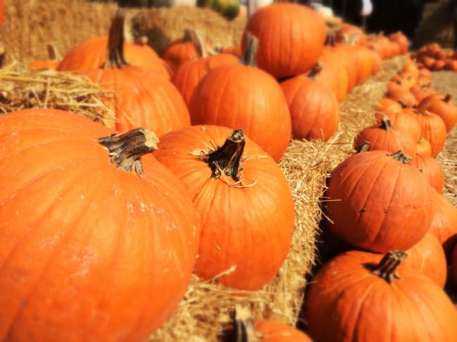 Finding the perfect pumpkin is a favorite fall activity in Northern Virginia