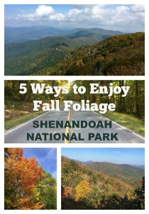 Here are 5 ways to immerse yourself in the abundant colors of fall foliage in Shenandoah National Park, and explore the sweeping views from Skyline Drive.