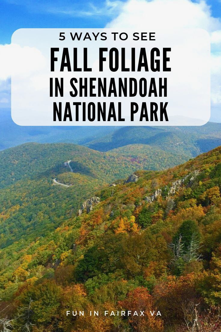 5 ways to enjoy fall foliage in Shenandoah National Park Virginia. Outdoor adventure and a scenic road trip in the mid-Atlantic USA.