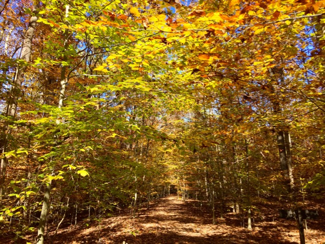 Fall trail Prince William NFP