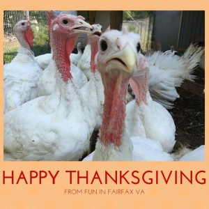A Happy Thanksgiving from FuninFairfaxVA