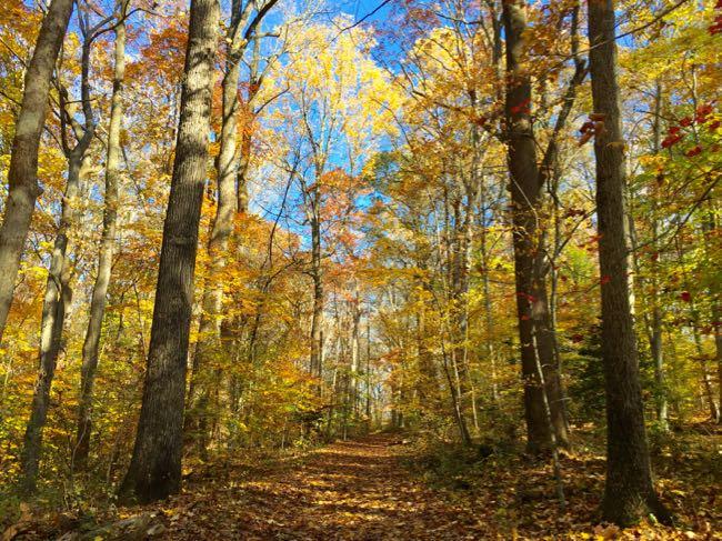Stubblefield Falls Trail, Scotts Run fall loop hike in McLean VA