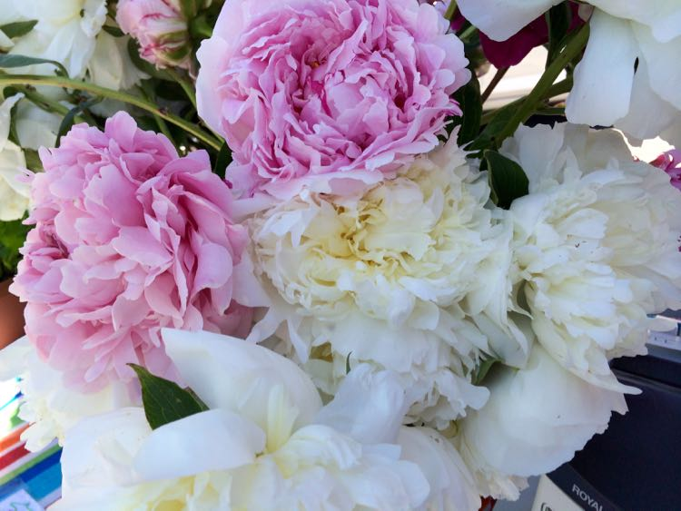 Northern Virginia Farmers Market peonies