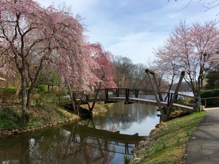 Van Gogh Bridge Reston Virginia