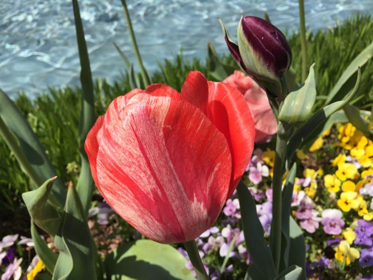 gorgeous gardens Virginia and DC